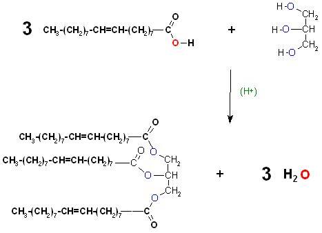 Ölsäureveresterung Glycerin H(+).JPG