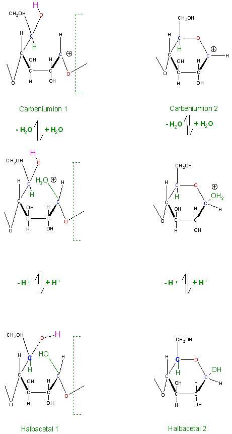 Halbacetale 1 und 2.JPG