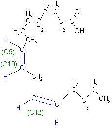 Linolsäure, Z,Z-9,12-Octadeca-diensäure.JPG