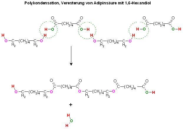 Polykondensation, Veresterung von Adipinsäure mit 1,6-Hexandiol.JPG