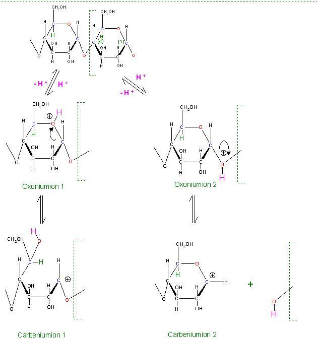 Hydrolyse Amylose Oxoniumionen 1 und 2.JPG