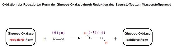 Ox. der Red.-Form der GOD mit O2 zu GOD-Ox. + HO-OH.jpg