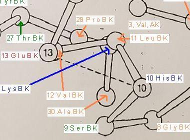 Kation-Anion Imidazoliumion Carboxylation Histidin Glutaminsäureanion.JPG